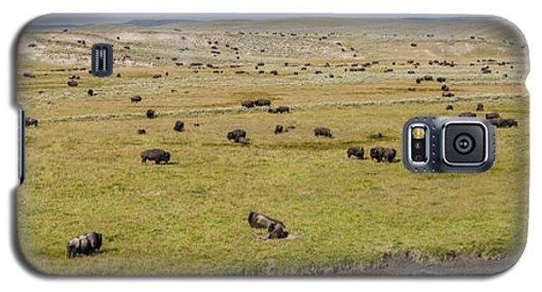 Bison Herd Galaxy S5 Case