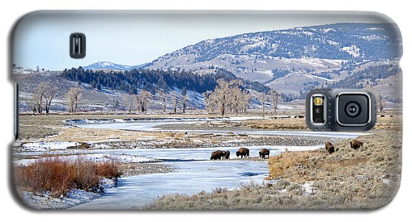 Bison In Lamar Valley Galaxy S5 Case