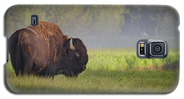 Bison In Morning Light Galaxy S5 Case