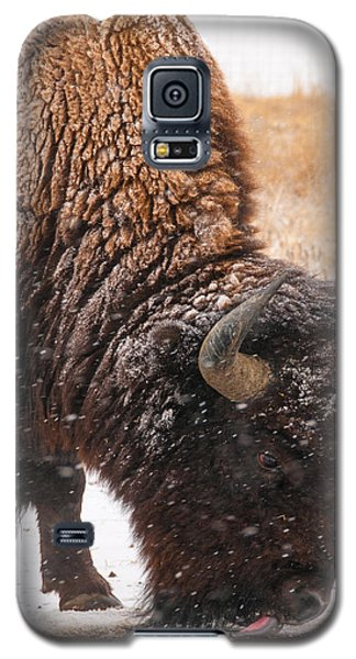 Bison In Snow_1 Galaxy S5 Case by Tom Potter