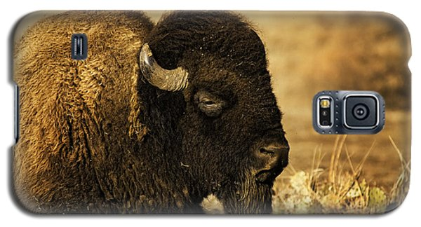Bison In The Wichitas Galaxy S5 Case by Iris Greenwell
