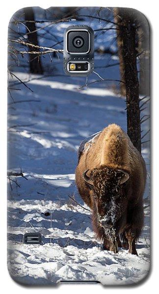 Bison In Winter Galaxy S5 Case