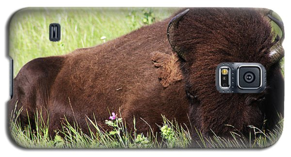 Bison Nap Galaxy S5 Case