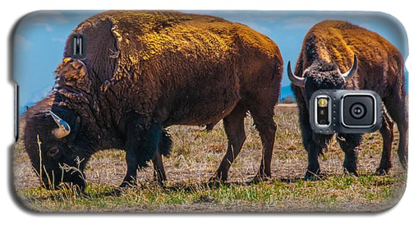 Bison Pair_1 Galaxy S5 Case by Tom Potter