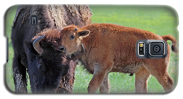 Bison With Young Calf Galaxy S5 Case