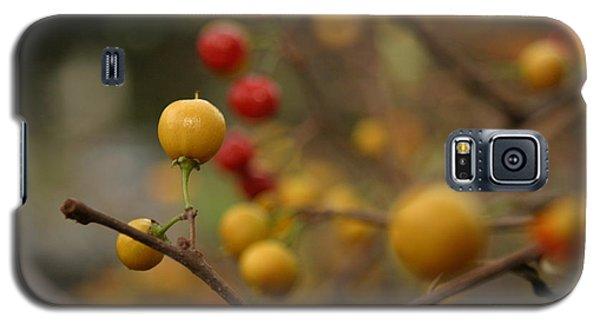 Galaxy S5 Case featuring the photograph Bittersweet - Near by Kenny Glotfelty