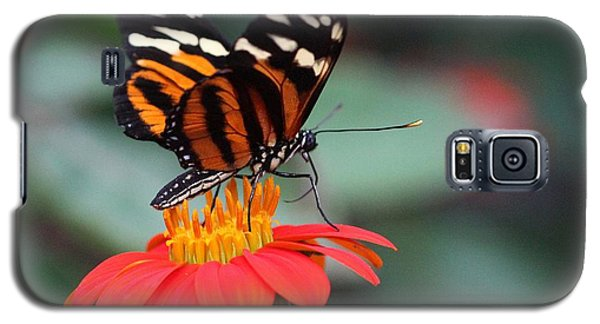 Black And Brown Butterfly On A Red Flower Galaxy S5 Case