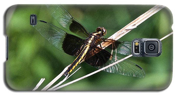 Black And Gold Dragonfly Galaxy S5 Case