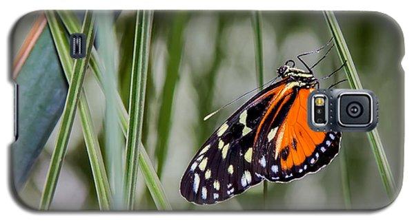 Black And Orange On Grasses Galaxy S5 Case by Karen Stephenson