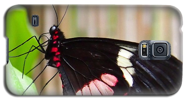 Galaxy S5 Case featuring the photograph Black And Red Cattleheart Butterfly by Amy McDaniel