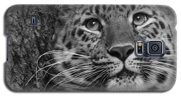 Black And White Amur Leopard Galaxy S5 Case
