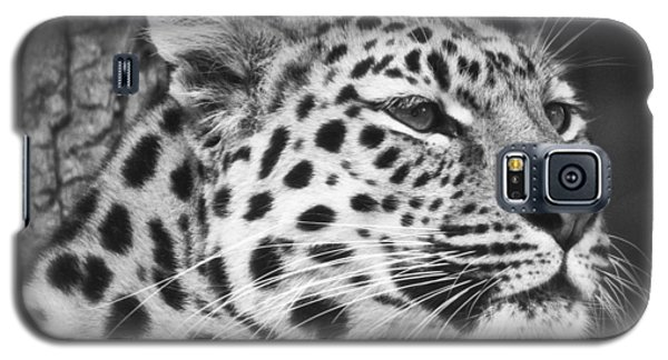 Black And White - Amur Leopard Portrait Galaxy S5 Case