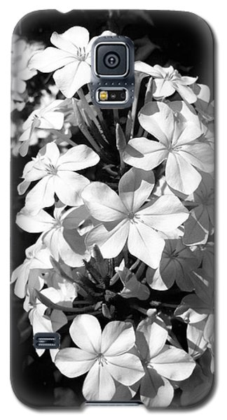 Galaxy S5 Case featuring the photograph Black And White Beauty by Alohi Fujimoto