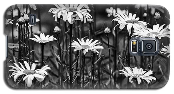 Black And White Daisies Galaxy S5 Case by Mary Carol Story