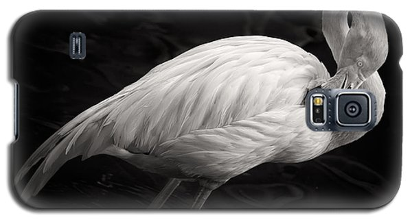 Flamingo Galaxy S5 Case - Black And White Flamingo by Adam Romanowicz