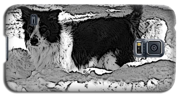 Galaxy S5 Case featuring the photograph Black And White In Snow by Michael Porchik