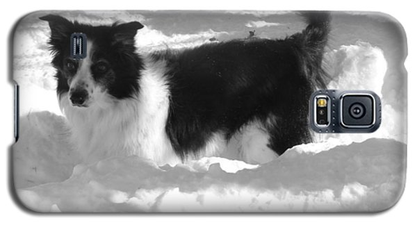 Galaxy S5 Case featuring the photograph Black And White In The Snow by Michael Porchik