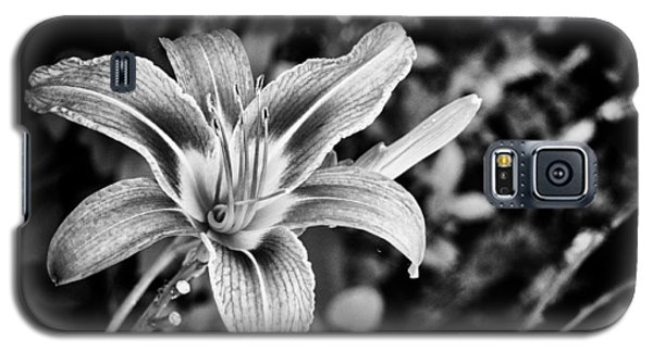 Black And White Lily Galaxy S5 Case by Bradley Clay