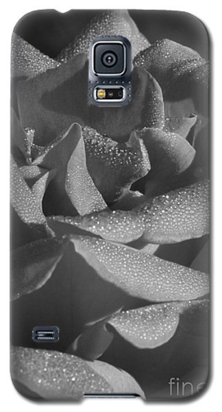 Black And White Morning Rose Galaxy S5 Case