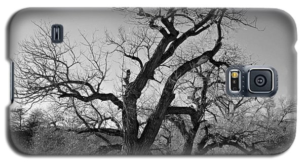 Galaxy S5 Case featuring the photograph Black And White Oak by Janice Westerberg