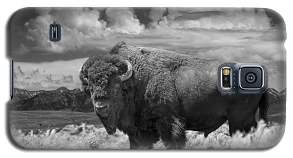 Black And White Photograph Of An American Buffalo Galaxy S5 Case by Randall Nyhof