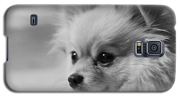 Black And White Portrait Of Pixie The Pomeranian Galaxy S5 Case