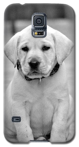 Black And White Puppy Galaxy S5 Case