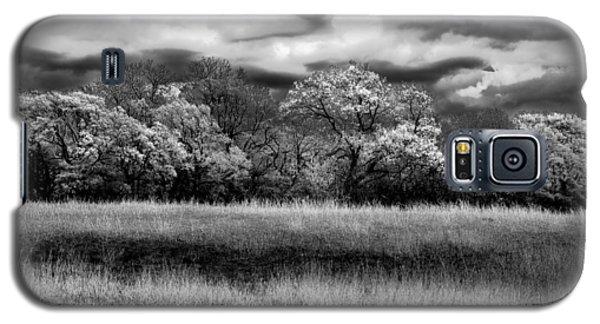 Black And White Trees Galaxy S5 Case by Darryl Dalton