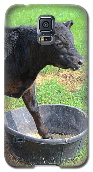 Black Angus Calf Galaxy S5 Case