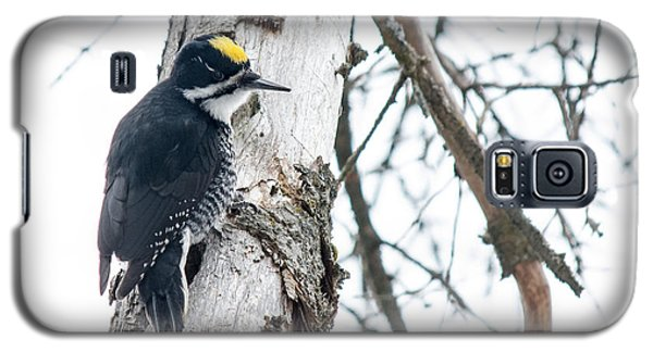 Black-backed Woodpecker Galaxy S5 Case