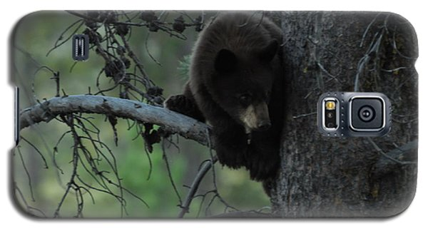 Black Bear Cub In Tree Galaxy S5 Case