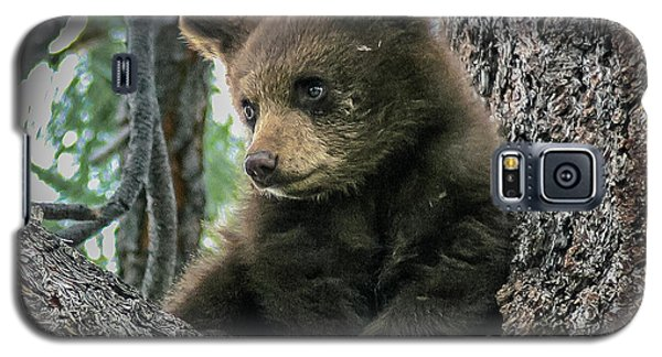 Black Bear Cub Galaxy S5 Case by Mitch Shindelbower