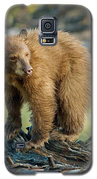 Galaxy S5 Case featuring the photograph Black Bear by Doug Herr