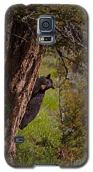 Galaxy S5 Case featuring the photograph Black Bear In A Tree by J L Woody Wooden