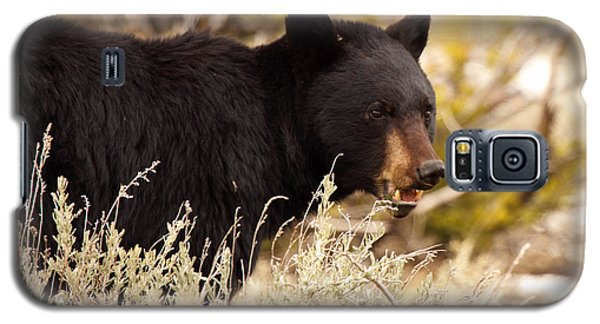 Galaxy S5 Case featuring the photograph Black Bear Showing Teeth by Max Allen