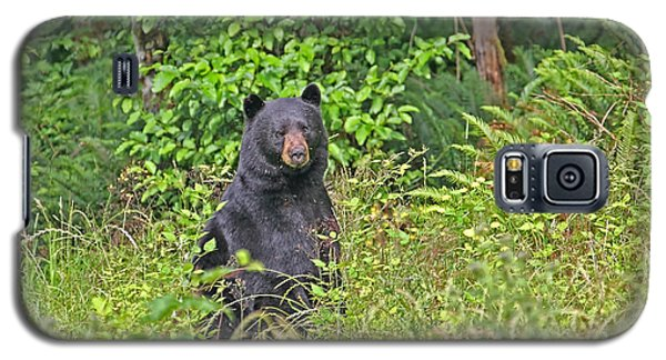 Galaxy S5 Case featuring the photograph Black Bear Standing Up by Peggy Collins