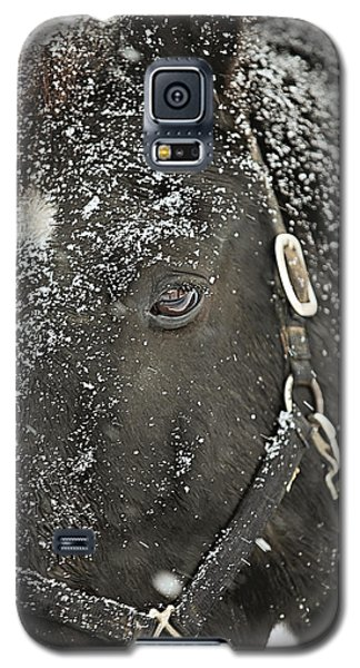 White Horse Galaxy S5 Case - Black Beauty In A Blizzard by Carrie Ann Grippo-Pike