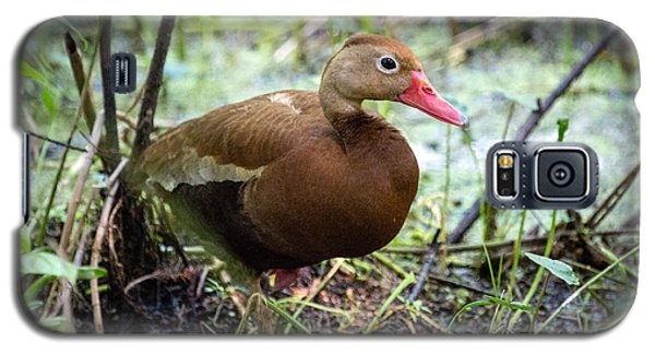 Black-bellied Whistling Duck 2 Galaxy S5 Case