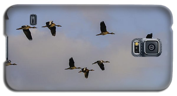 Black-bellied Whistling Ducks Galaxy S5 Case by Dorothy Cunningham