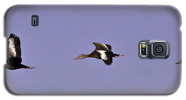 Black Bellied Whistling Ducks In Flight Galaxy S5 Case by Anne Rodkin