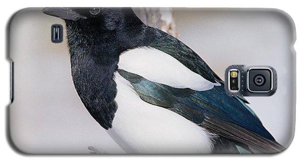 Black-billed Magpie Galaxy S5 Case by Eric Glaser