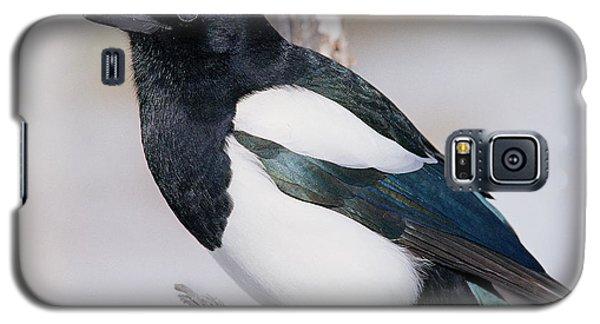 Black-billed Magpie Galaxy S5 Case