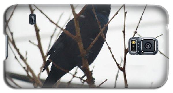Black Bird Anticipation Galaxy S5 Case