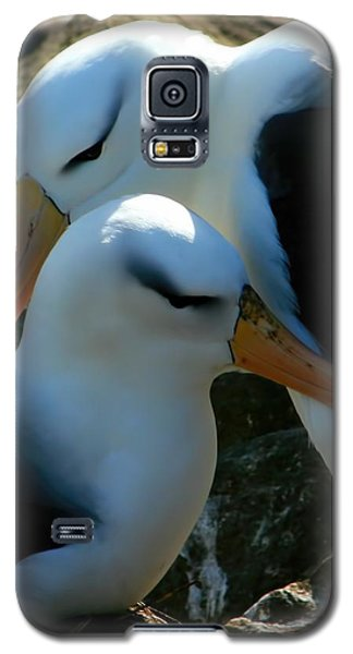 Galaxy S5 Case featuring the photograph Black Browed Albatross Pair by Amanda Stadther