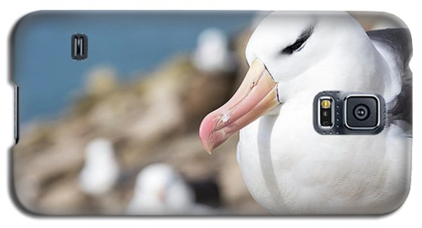 Black-browed Albatross (thalassarche Galaxy S5 Case