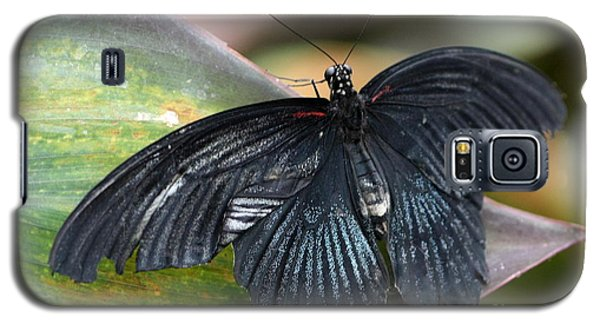 Black Butterfly Galaxy S5 Case