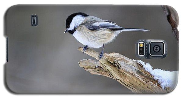 Black-capped Chickadee Galaxy S5 Case by Gary Hall
