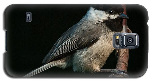 Galaxy S5 Case featuring the photograph Black-capped Chickadee by Jim Moore