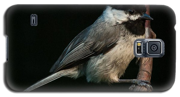 Black-capped Chickadee Galaxy S5 Case by Jim Moore