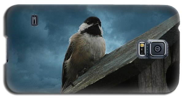 Black-capped Chickadee  Galaxy S5 Case by Marjorie Imbeau